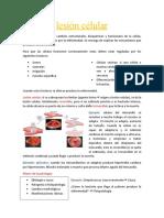 lesión célular.docx