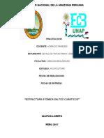 UNIVERSIDAD NACIONAL DE LA AMAZONIA PERUANA infop5.docx