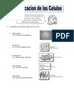 Ficha-Clasificacion-de-las-Celulas-para-Quinto-de-Primaria (1)