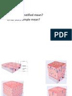 Biol109 histology study slides