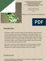 DV 13 División Pteridophyta.pdf