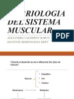 Embriología Muscular