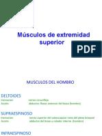 MUSCULOS DE EESS , EEII