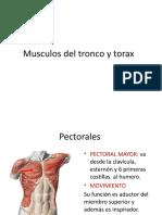 MUSCULOS DEL TRONCO Y TORAX