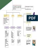 mapa del glaucoma PDF