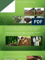 Residuos que sirven como abono para cultivos