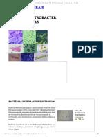 Bactérias Nitrobacter Nitrosomonas - Comida de Corais