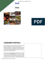 Camarão Pistola - Comida de Corais