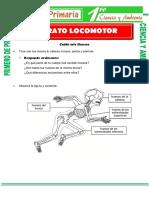 aparato-locomotor-para-Primero-de-Primaria.pdf