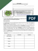 guía de virus y bacterias
