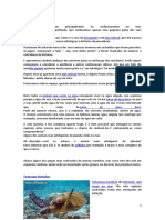 animais marinhos.docx