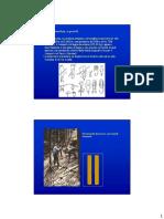 esbosco_per_via_aerea_2.pdf