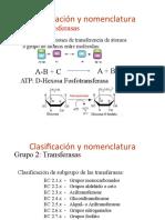 enzimas parte 4