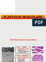 Lezione 2 Plasticità Muscolare