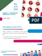 Unidad 1 Psicología evolutiva y diferencial