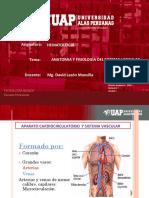 3 ANATOMIA Y FISIIOLOGIA DEL SISTEMA VASCULAR- HEMATOLOGIA.pdf