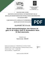 Etude hispatologique dromadaire_DRIOT.pdf