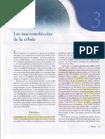 Capitulo III  Las Macromoléculas de la Célula.pdf