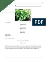 Basilic-(plante)