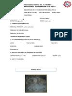 CARTILLA-DE-SEDIMENTARIAS-CLASTICAS