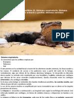 Conferencia 17. Anfibios.pdf