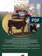 MCS Cattle Company Brochure 2011-01