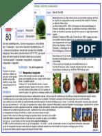 80.pdf