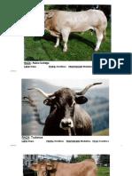 Práctica de Ganado Bovino Corregido (4).pdf