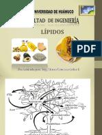 .LIPIDOS