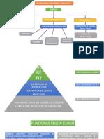 Fase Organización.pptx