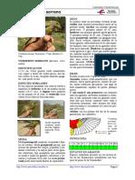 429_Serinus_citrinella.pdf