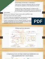 5. Neurotransmisión