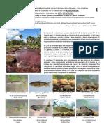 842_colombia_fishes_of_inirida_y_guaviare.pdf