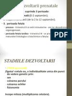 Stadiile-dezvoltarii-prenatale