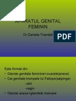 Aparatul Genital Feminin
