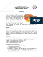 CÚRCUMA.docx