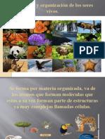 Estructura y organización de los seres vivos presentacion Valeria