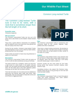 Common-Long-Necked-Turtle.pdf