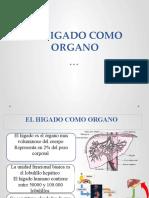 Cap 71 Higadocomo Organo.pptx