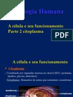 celula - citoplasma