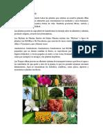 Reino Plantea - Animal - Mineral - 2020