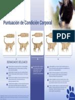 Condicion corporal gatos.pdf