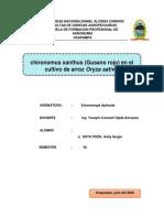 chironomus xanthus (Gusano rojo)