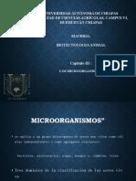 MICRO ORGANISMOS.pptx