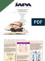 UNIVERSIDAD ABIERTA PARA ADULTOS tarea 3 anatomia 2020