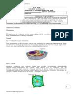 8°A Ciencias Célula; organelos celulares II