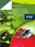 Insectos 4.seccion_5-6-7.pdf