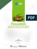 Biologia y Caracteristicas de Pulgones