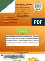 ARROZ DORADO-EXPO.pptx