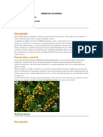MERMELADA DE NARANJA.docx